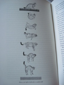 Bradshaw's diagram of a cat landing on its feet.