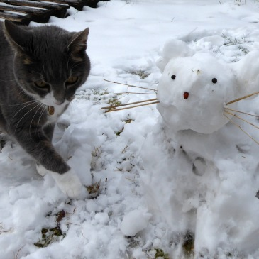 Snow kitty.